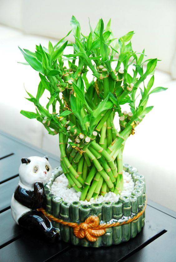 oso panda con bambu