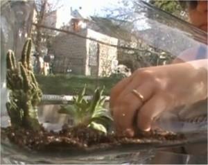 jardineria-sorprendente