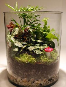 Terrario Jardín en Miniatura 7