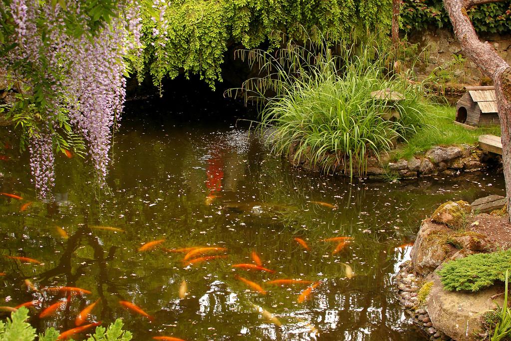 lagos para jardines japoneses