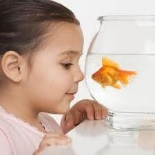niños y peces