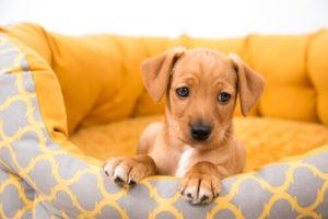 Lo que debes saber antes de tener un perro 1