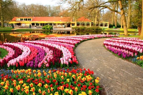 Plantaciones de tulipanes en Holanda