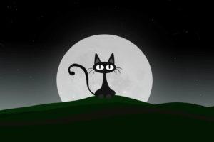 gato noctambulo