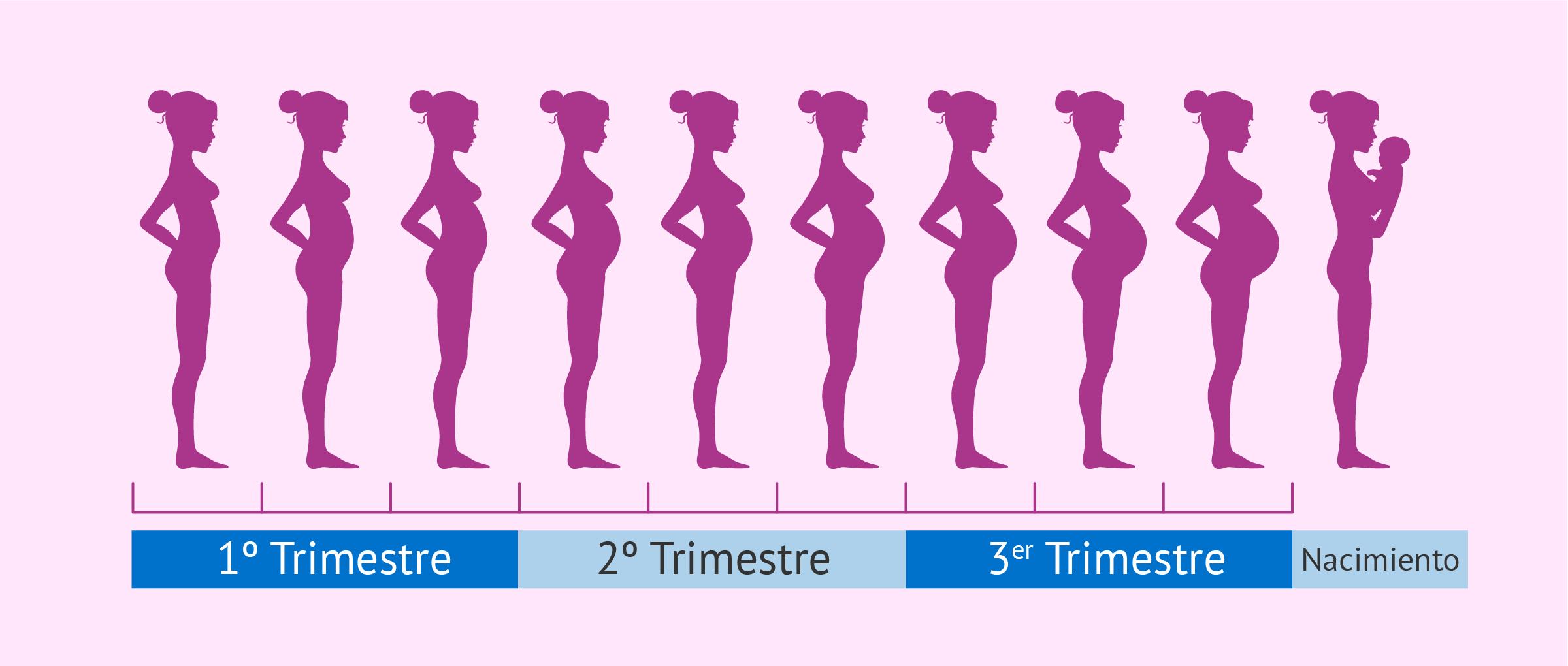 Embarazo guia