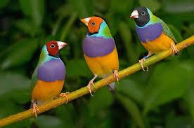 aves exoticas llamativas coloridas