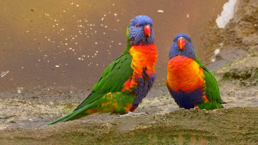 Aves exóticas 1