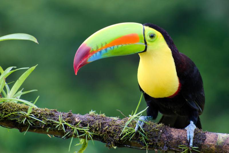 tucan ave exótica