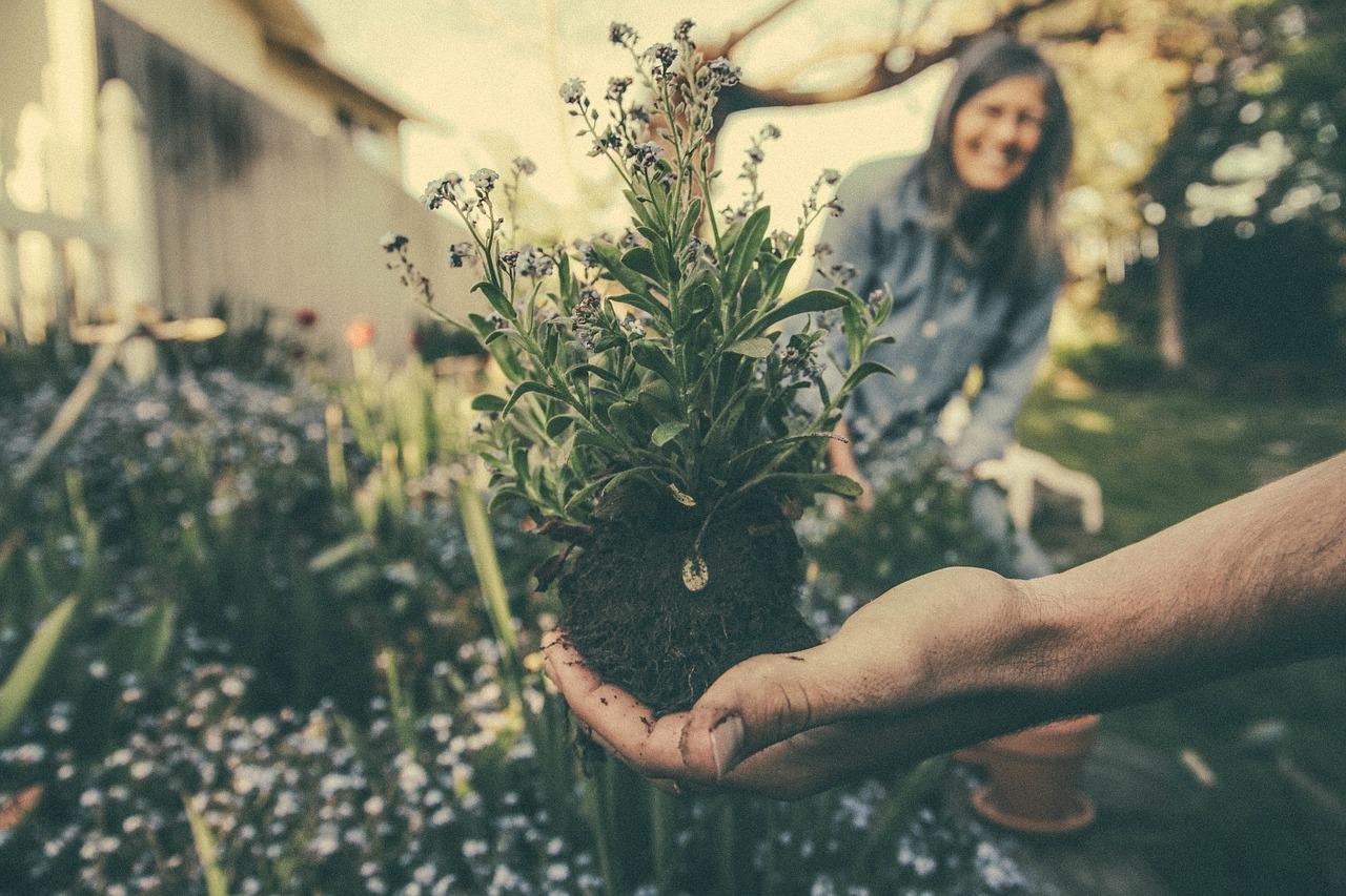 Consejos para el mantenimiento del jardín