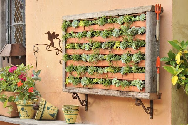 suculentas exterior jardin