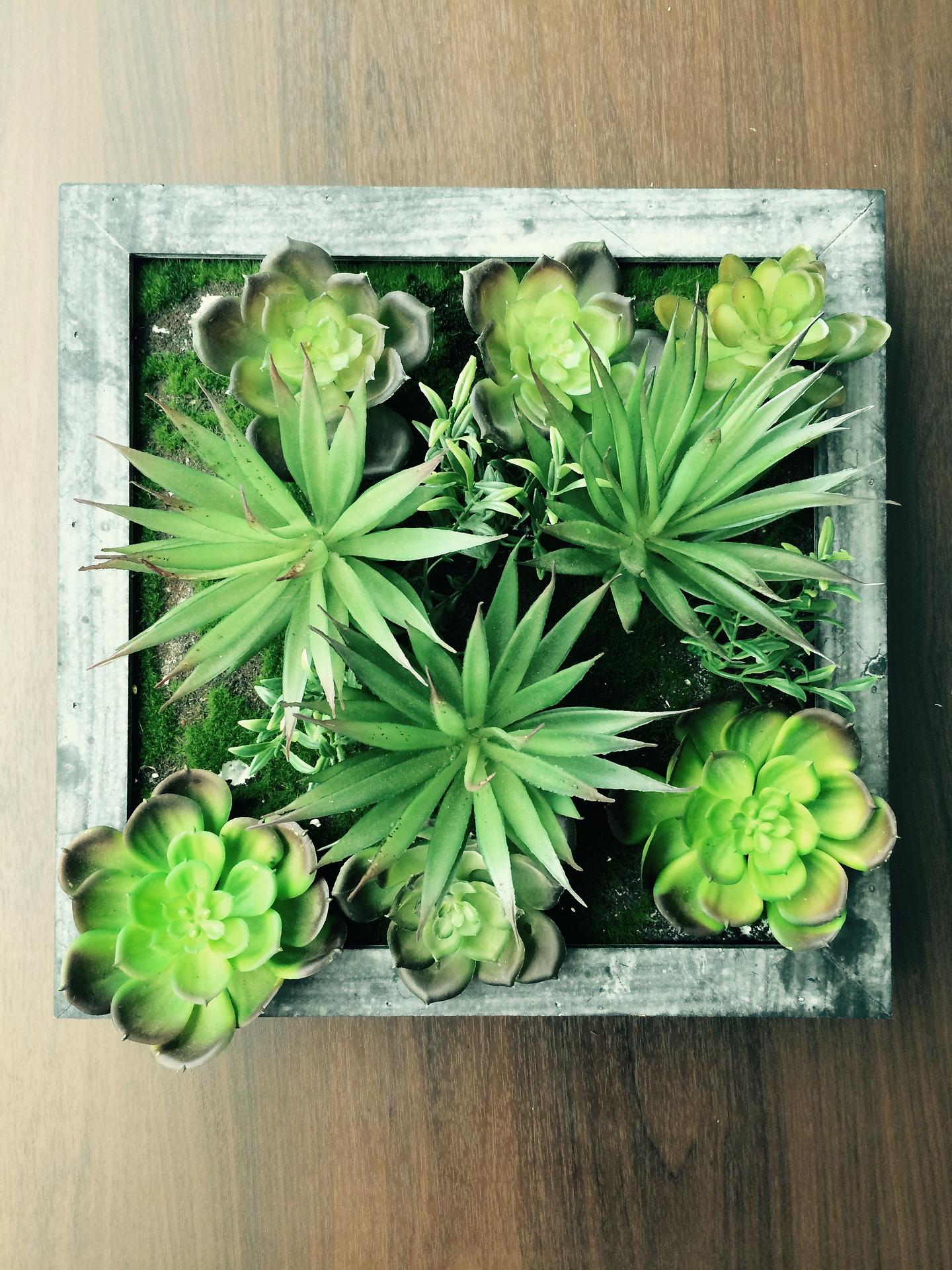 plantas suculentas verdes