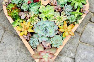 Plantas suculentas decorativas