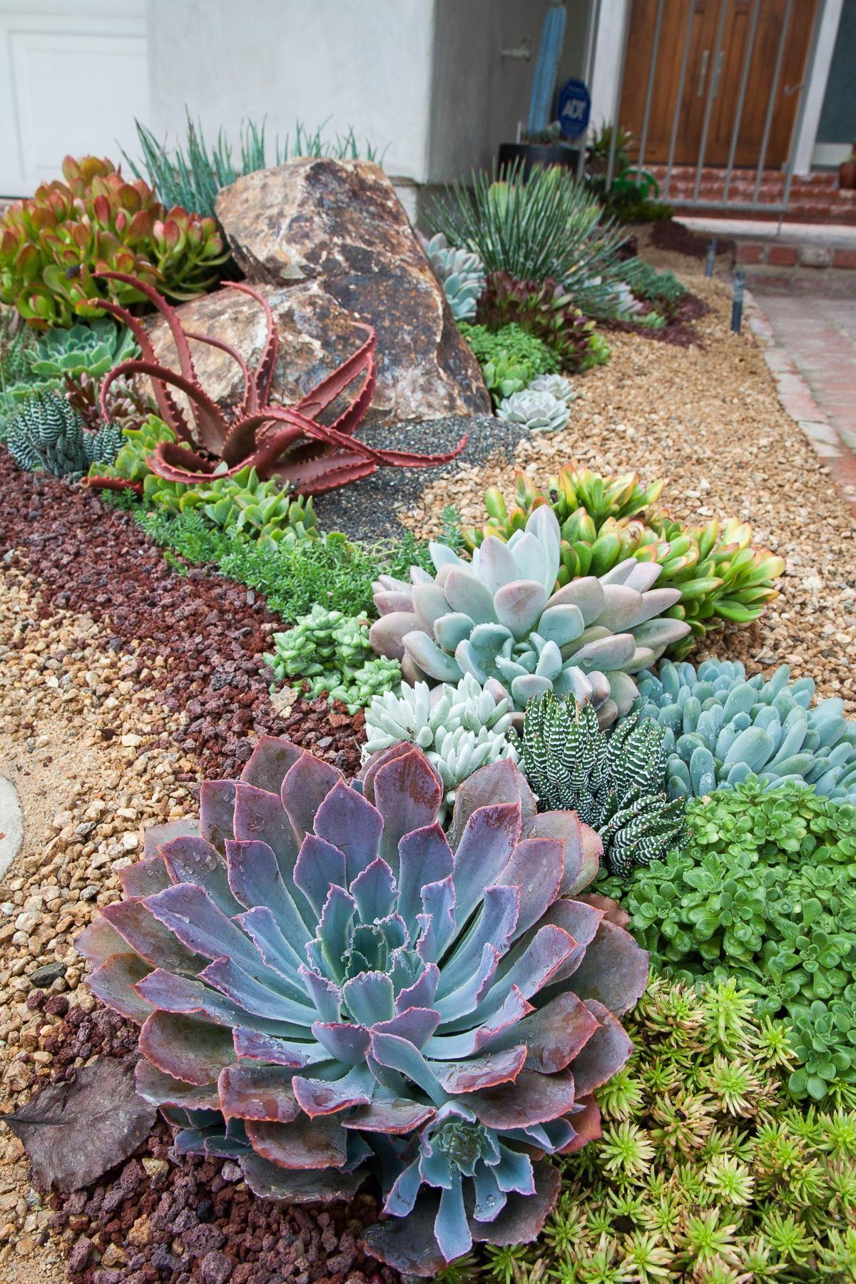 Plantas suculentas en el jardín