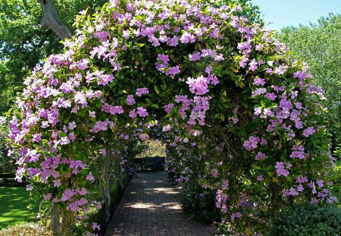 jardin flores exterior bignonia