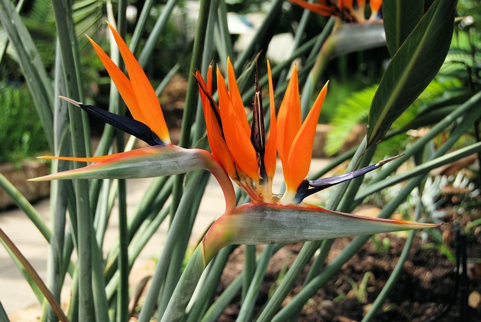 planta flor ave