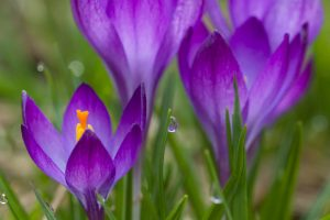 flores moradas jardin