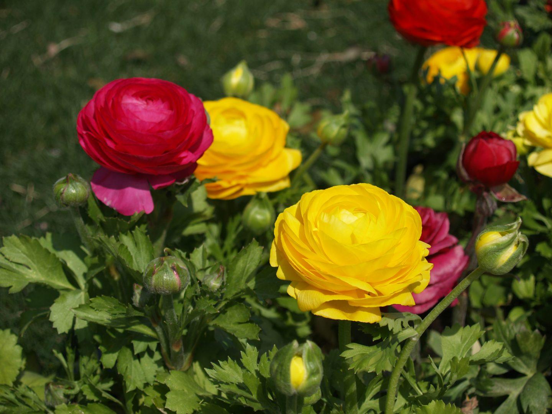 francesilla flores exterior