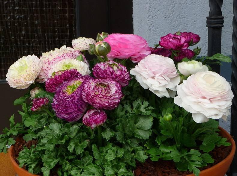 maceta flores jardin maceta