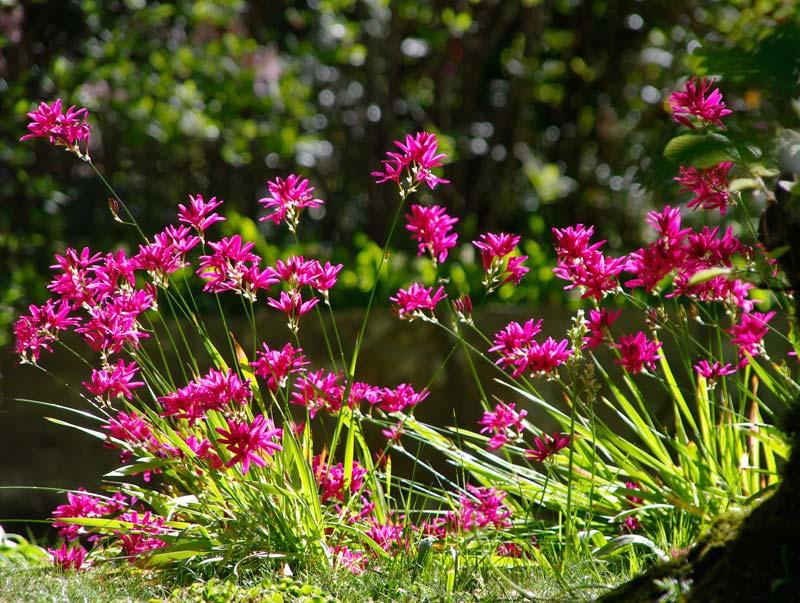 jardin ixia exterior