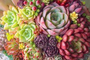 suculentas plantas exterior