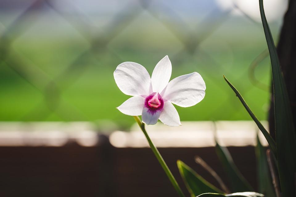 orquídea blanca y morada